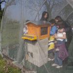 Percorso api