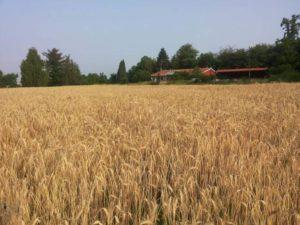 tecnico agricoltura biologica