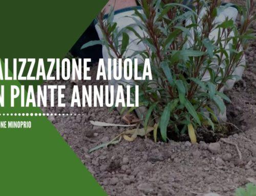 Realizzazione aiuola con piante annuali